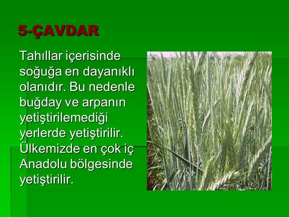 5-ÇAVDAR