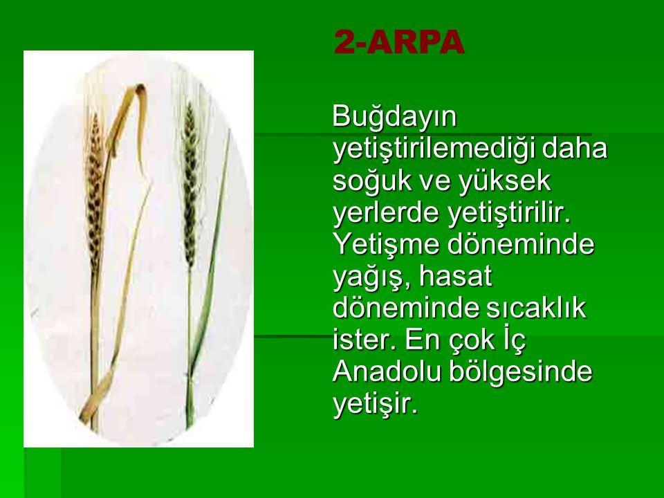 ARPA 2-ARPA.