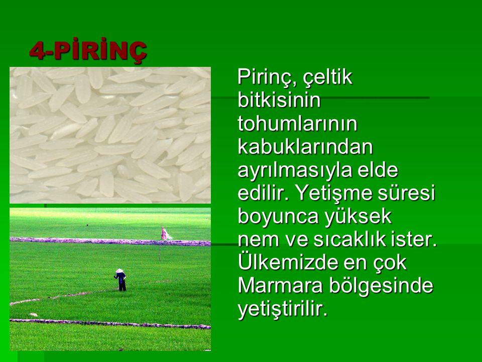 4-PİRİNÇ