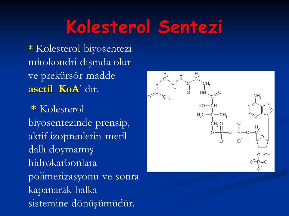 Kolesterol Sentezi * Kolesterol biyosentezi mitokondri dışında olur ve prekürsör madde asetil KoA' dır.