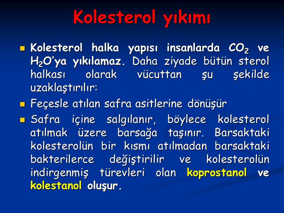 Kolesterol yıkımı