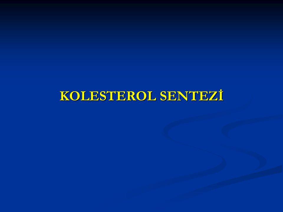 KOLESTEROL SENTEZİ