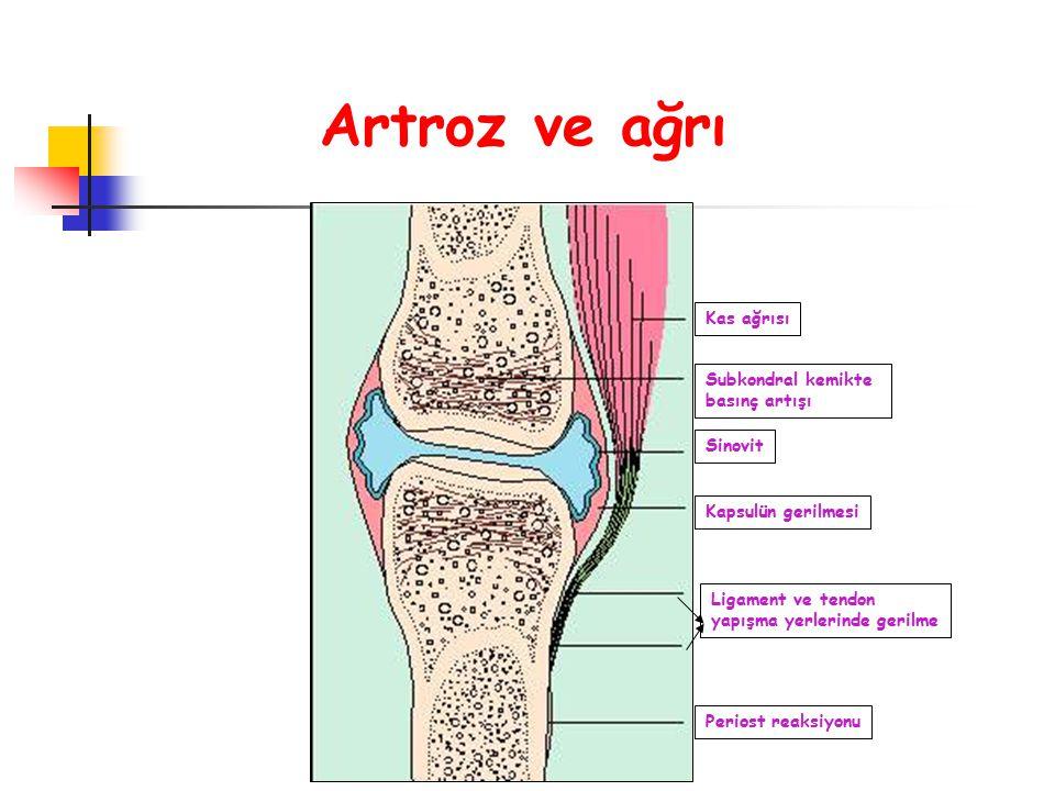 Artroz ve ağrı Kas ağrısı Subkondral kemikte basınç artışı Sinovit