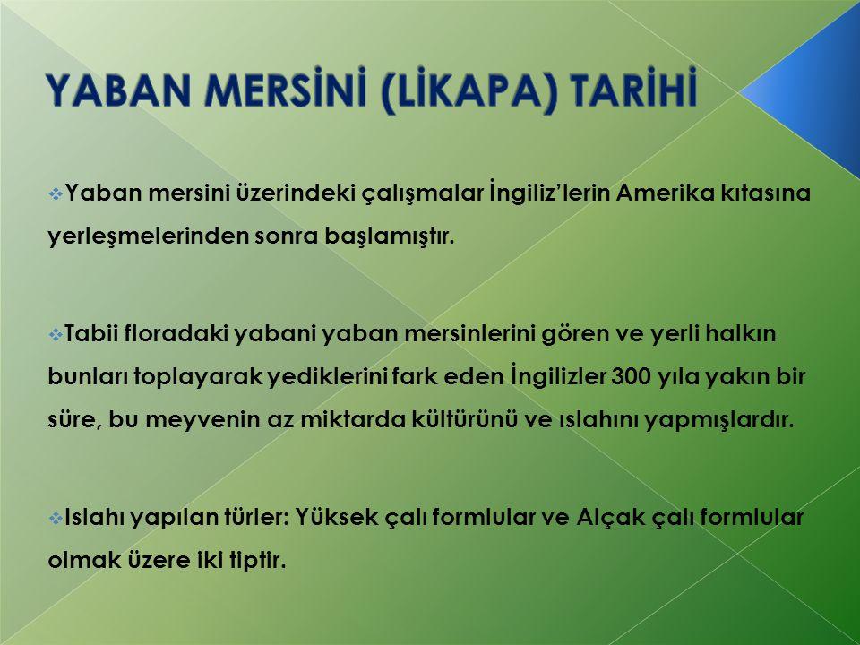 YABAN MERSİNİ (LİKAPA) TARİHİ