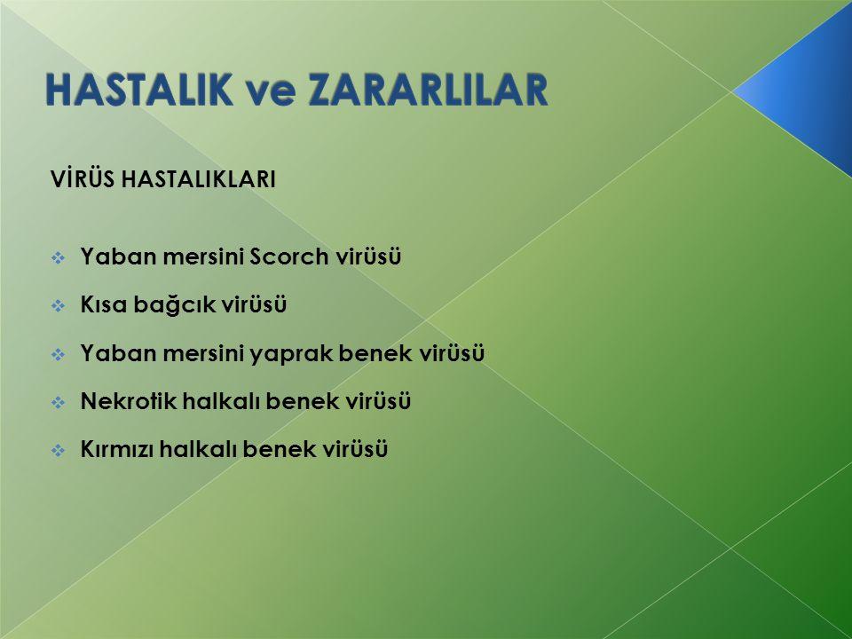 HASTALIK ve ZARARLILAR