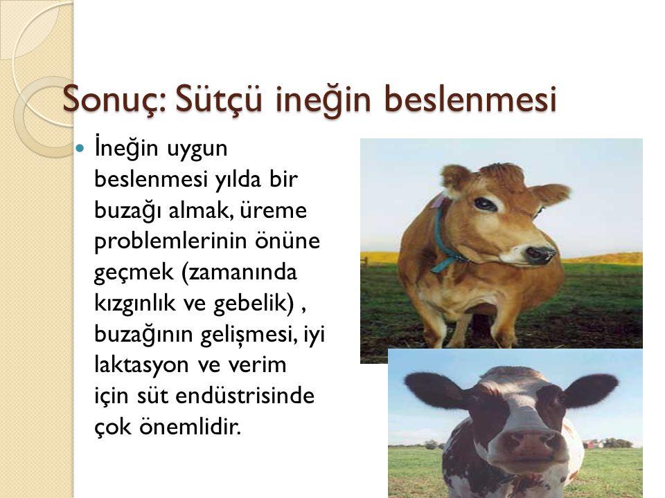Sonuç: Sütçü ineğin beslenmesi