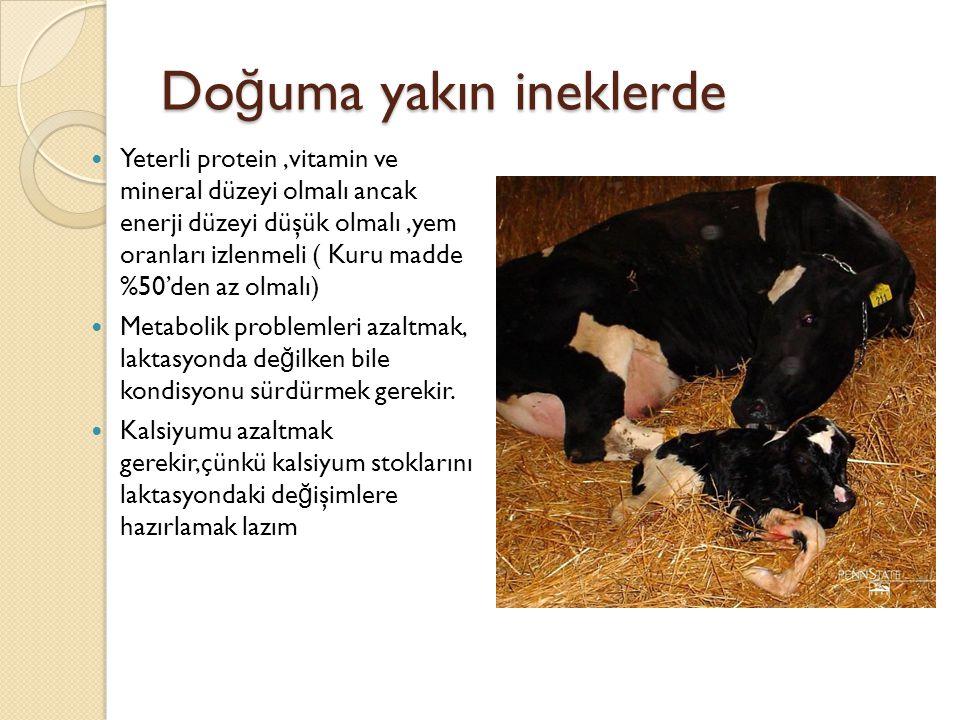 Doğuma yakın ineklerde