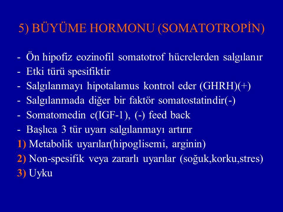 5) BÜYÜME HORMONU (SOMATOTROPİN)