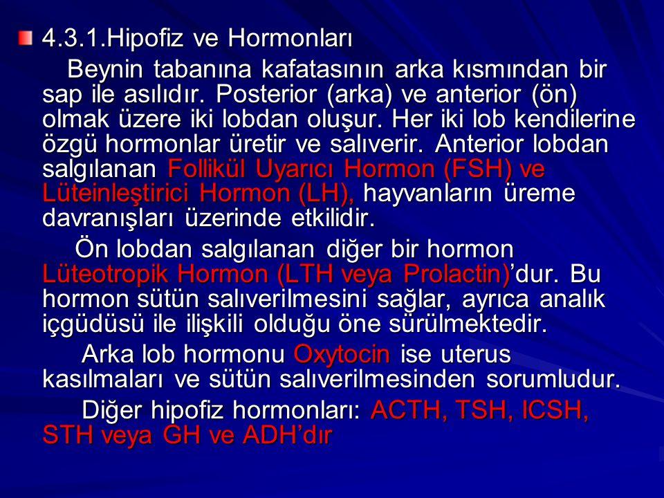 4.3.1.Hipofiz ve Hormonları