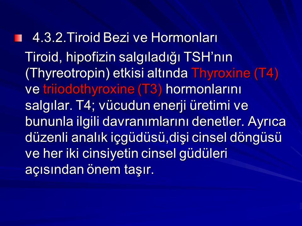 4.3.2.Tiroid Bezi ve Hormonları