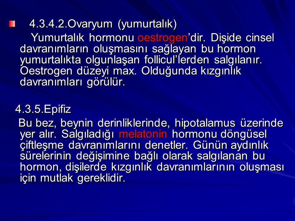 4.3.4.2.Ovaryum (yumurtalık)