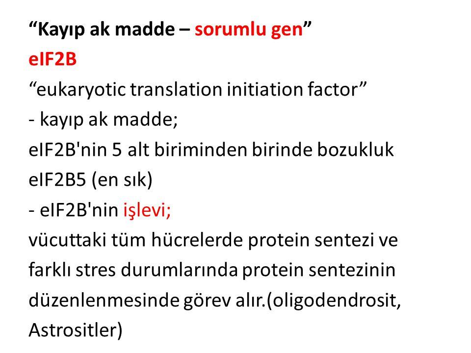 Kayıp ak madde – sorumlu gen eIF2B eukaryotic translation initiation factor - kayıp ak madde; eIF2B nin 5 alt biriminden birinde bozukluk eIF2B5 (en sık) - eIF2B nin işlevi; vücuttaki tüm hücrelerde protein sentezi ve farklı stres durumlarında protein sentezinin düzenlenmesinde görev alır.(oligodendrosit, Astrositler)