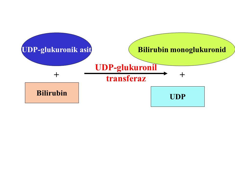 Bilirubin monoglukuronid UDP-glukuronil transferaz