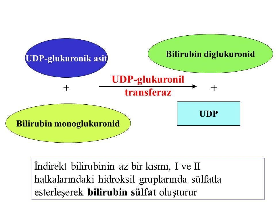 UDP-glukuronil transferaz + +