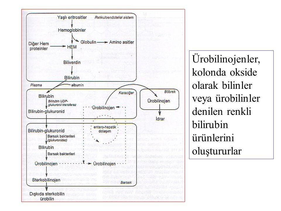 Ürobilinojenler, kolonda okside olarak bilinler veya ürobilinler denilen renkli bilirubin ürünlerini oluştururlar
