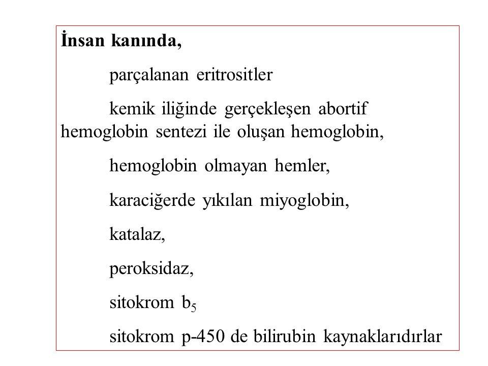 İnsan kanında, parçalanan eritrositler. kemik iliğinde gerçekleşen abortif hemoglobin sentezi ile oluşan hemoglobin,