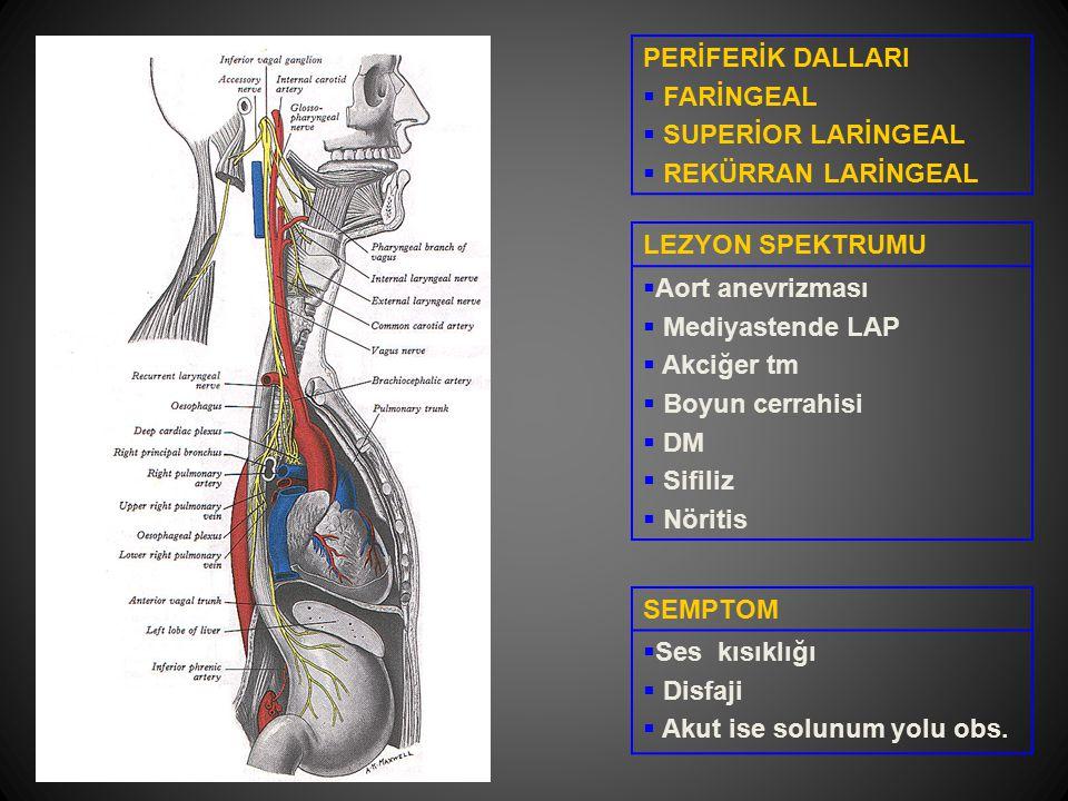 PERİFERİK DALLARI FARİNGEAL. SUPERİOR LARİNGEAL. REKÜRRAN LARİNGEAL. LEZYON SPEKTRUMU. Aort anevrizması.