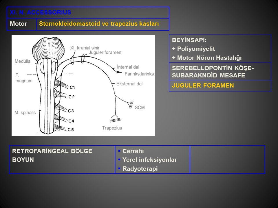 XI. N. ACCESSORIUS Motor. Sternokleidomastoid ve trapezius kasları. BEYİNSAPI: + Poliyomiyelit. + Motor Nöron Hastalığı.
