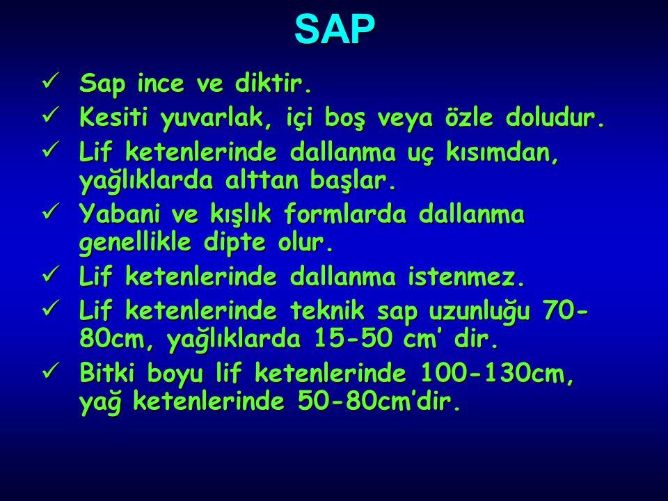 SAP Sap ince ve diktir. Kesiti yuvarlak, içi boş veya özle doludur.