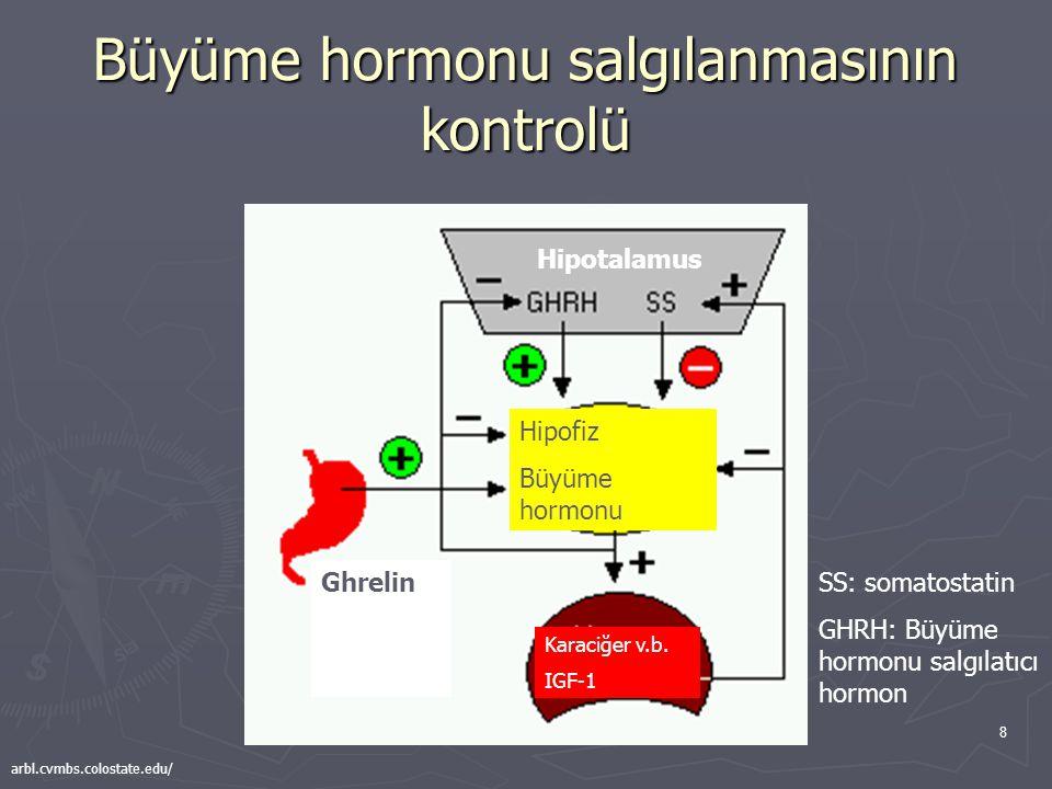 Büyüme hormonu salgılanmasının kontrolü