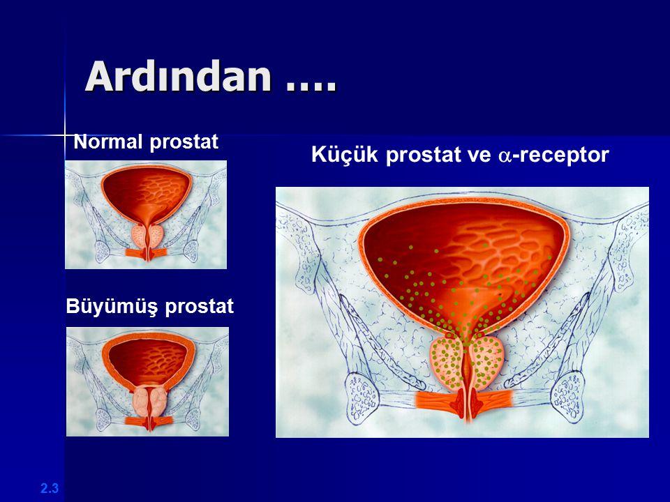 Küçük prostat ve -receptor