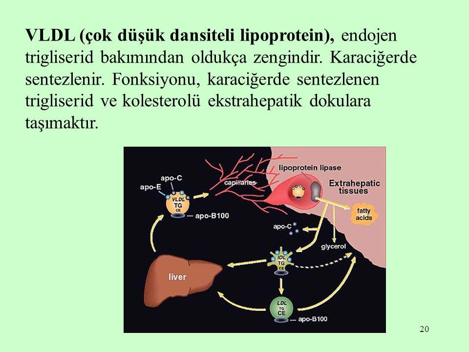 VLDL (çok düşük dansiteli lipoprotein), endojen trigliserid bakımından oldukça zengindir.
