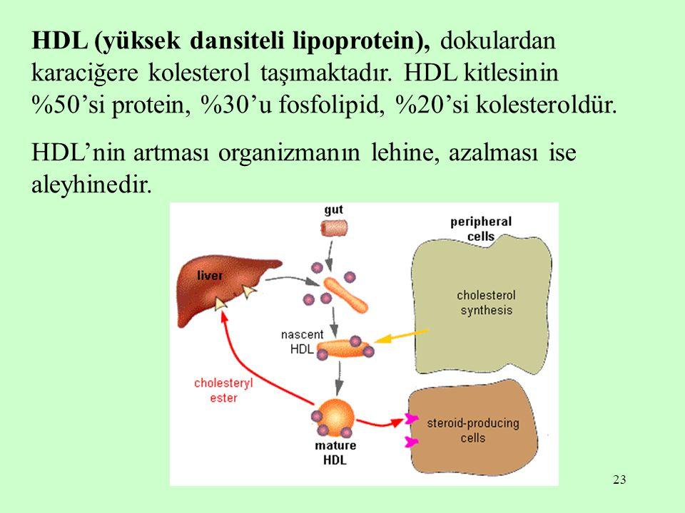 HDL (yüksek dansiteli lipoprotein), dokulardan karaciğere kolesterol taşımaktadır. HDL kitlesinin %50'si protein, %30'u fosfolipid, %20'si kolesteroldür.