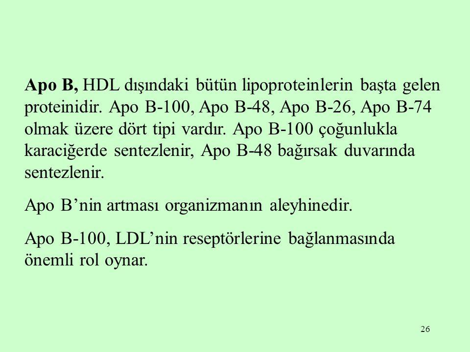 Apo B, HDL dışındaki bütün lipoproteinlerin başta gelen proteinidir