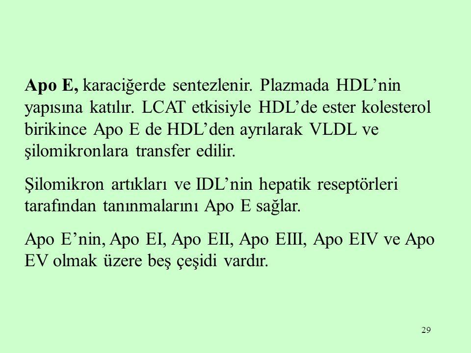 Apo E, karaciğerde sentezlenir. Plazmada HDL'nin yapısına katılır