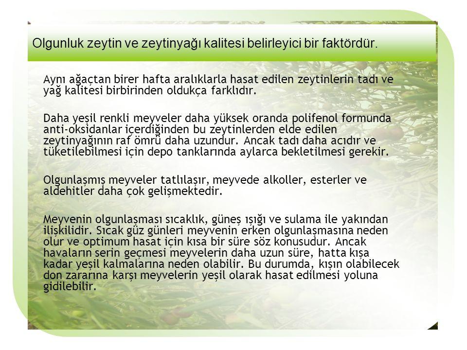 Olgunluk zeytin ve zeytinyağı kalitesi belirleyici bir faktördür.