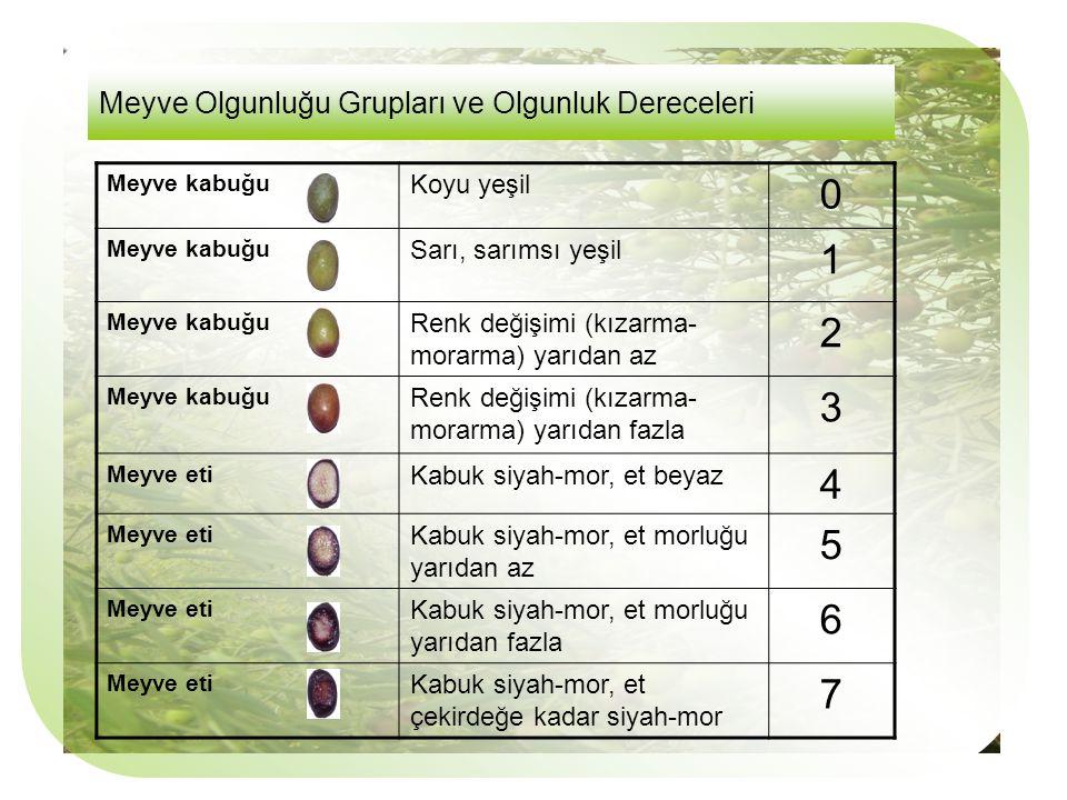 Meyve Olgunluğu Grupları ve Olgunluk Dereceleri