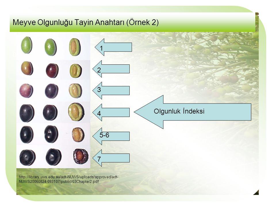 Meyve Olgunluğu Tayin Anahtarı (Örnek 2)
