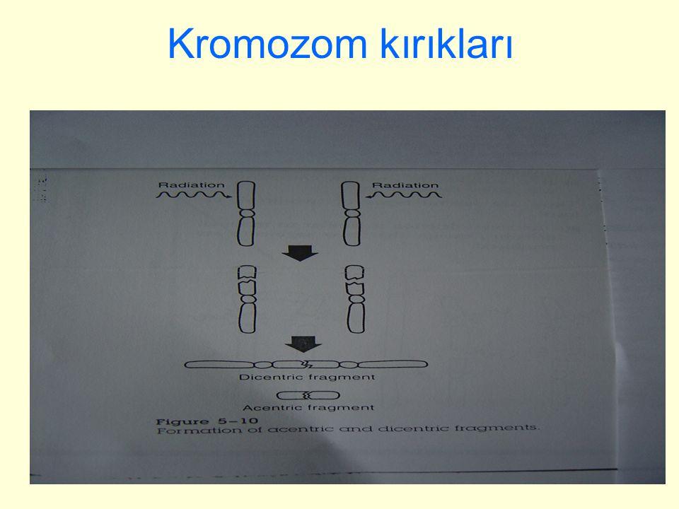 Kromozom kırıkları