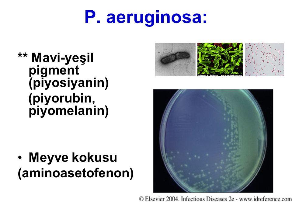 P. aeruginosa: ** Mavi-yeşil pigment (piyosiyanin)