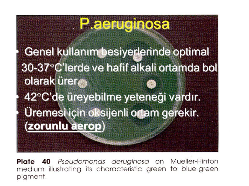 P.aeruginosa Genel kullanım besiyerlerinde optimal