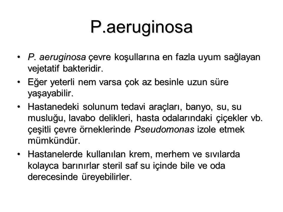 P.aeruginosa P. aeruginosa çevre koşullarına en fazla uyum sağlayan vejetatif bakteridir.