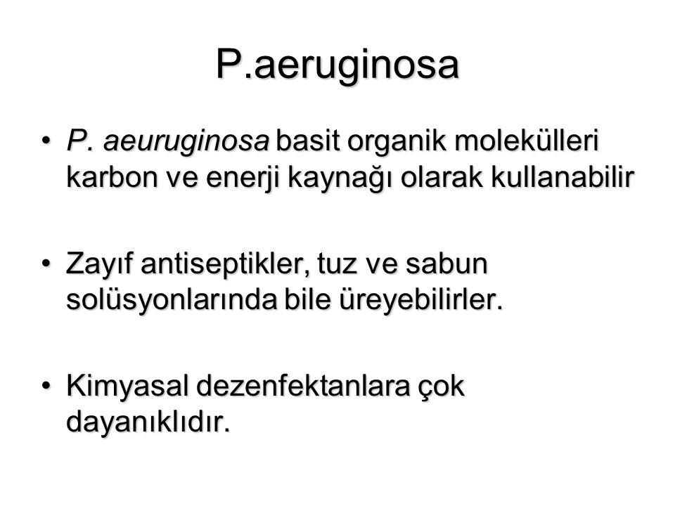 P.aeruginosa P. aeuruginosa basit organik molekülleri karbon ve enerji kaynağı olarak kullanabilir.