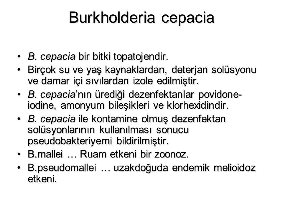 Burkholderia cepacia B. cepacia bir bitki topatojendir.