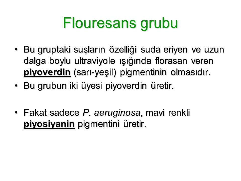 Flouresans grubu