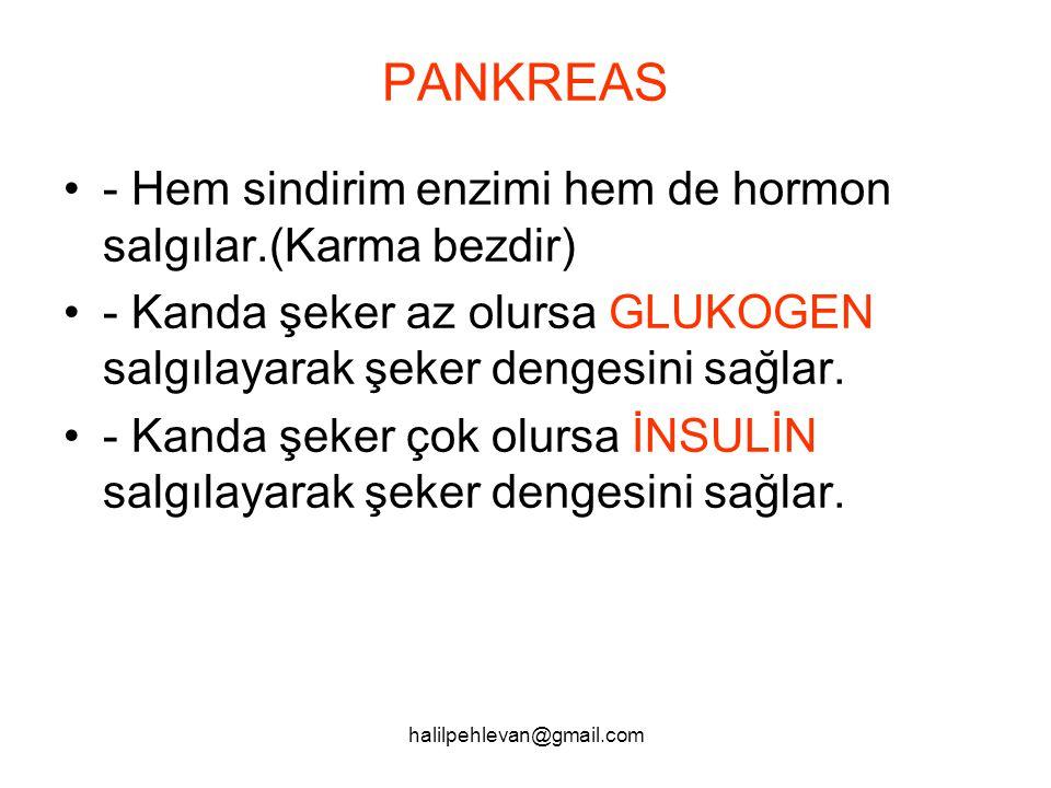 PANKREAS - Hem sindirim enzimi hem de hormon salgılar.(Karma bezdir)