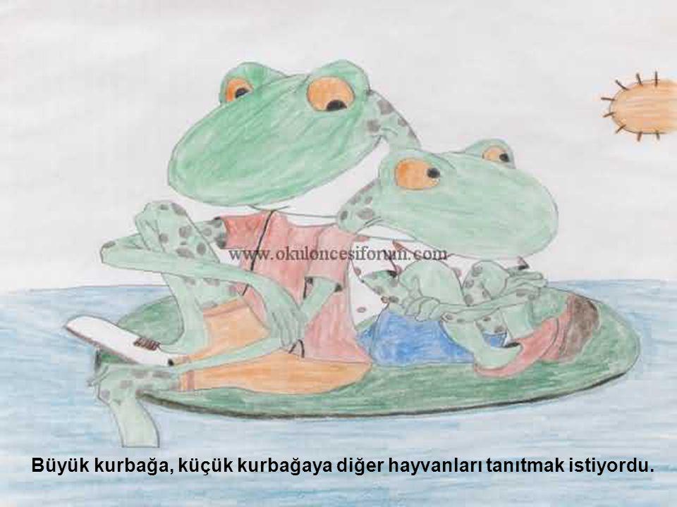 Büyük kurbağa, küçük kurbağaya diğer hayvanları tanıtmak istiyordu.