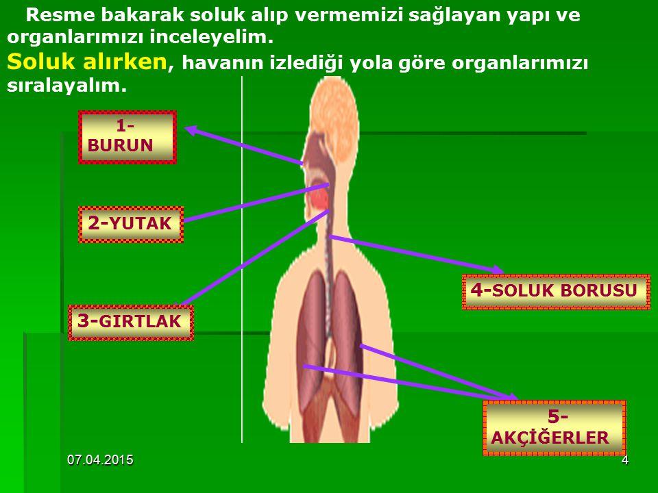 Soluk alırken, havanın izlediği yola göre organlarımızı sıralayalım.