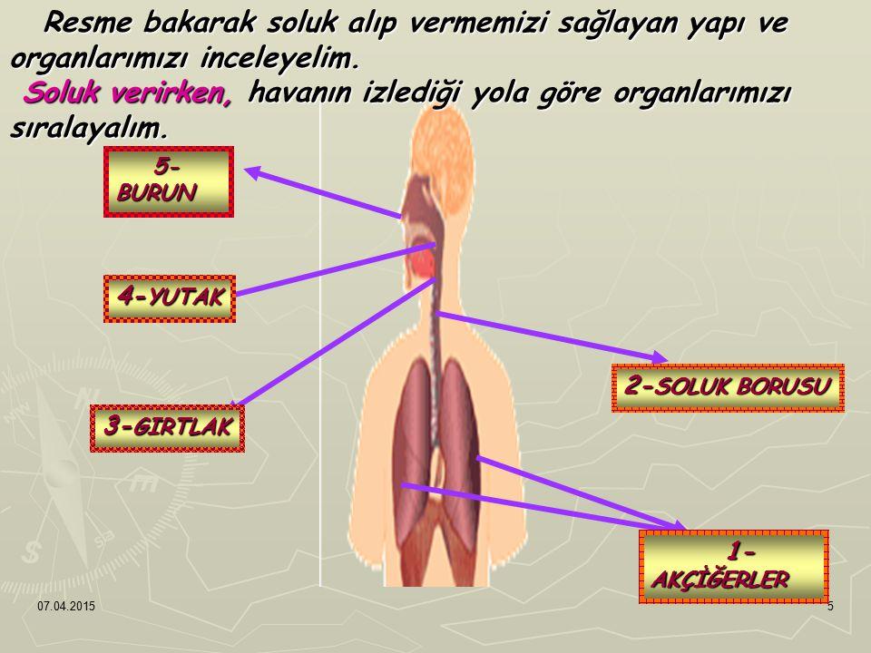 Soluk verirken, havanın izlediği yola göre organlarımızı sıralayalım.