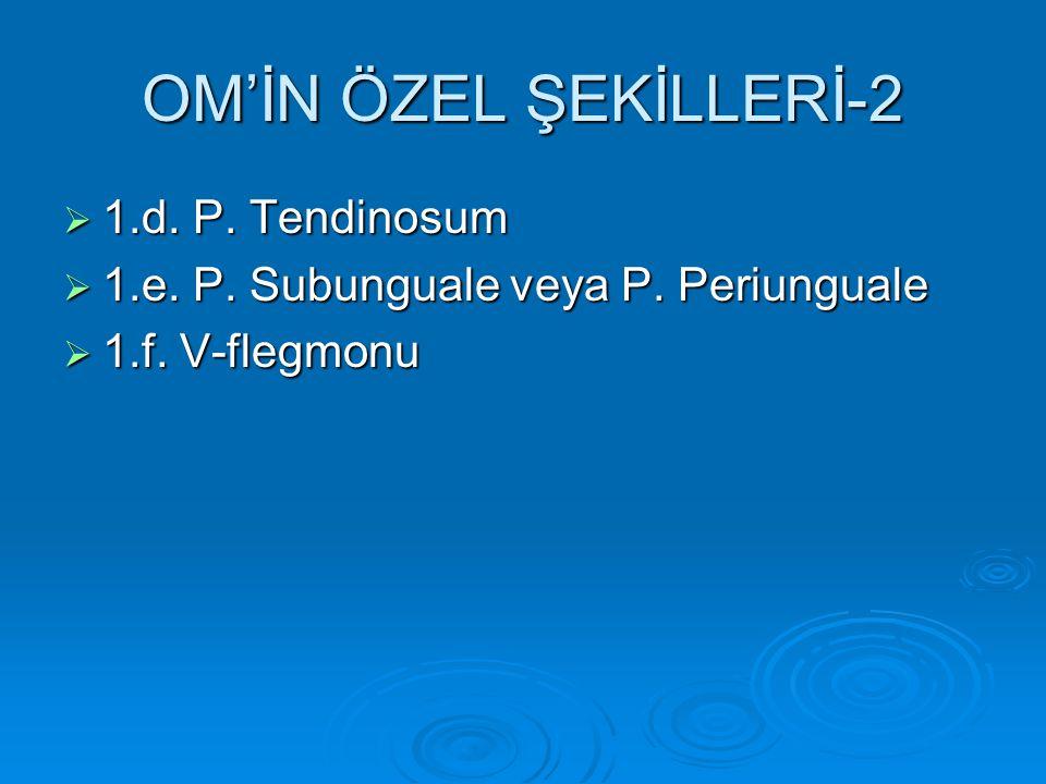 OM'İN ÖZEL ŞEKİLLERİ-2 1.d. P. Tendinosum