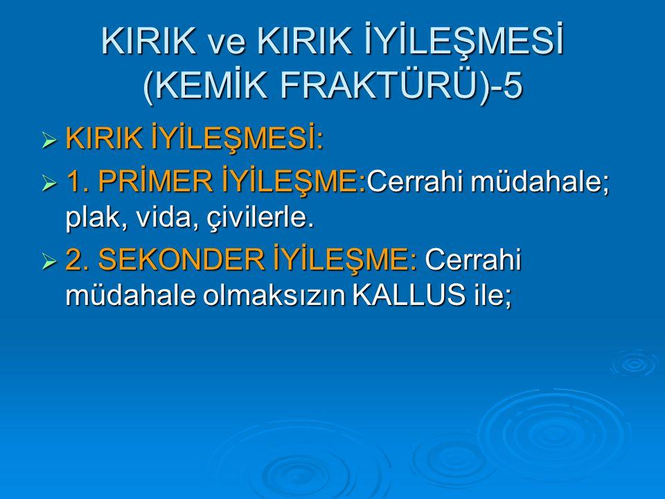 KIRIK ve KIRIK İYİLEŞMESİ (KEMİK FRAKTÜRÜ)-5