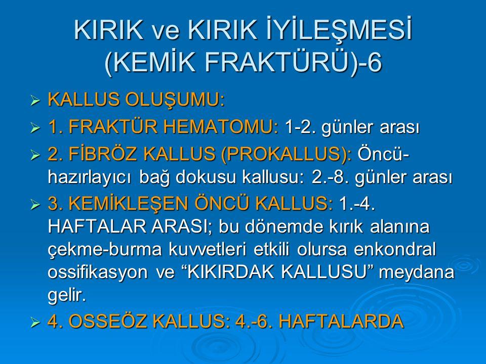 KIRIK ve KIRIK İYİLEŞMESİ (KEMİK FRAKTÜRÜ)-6