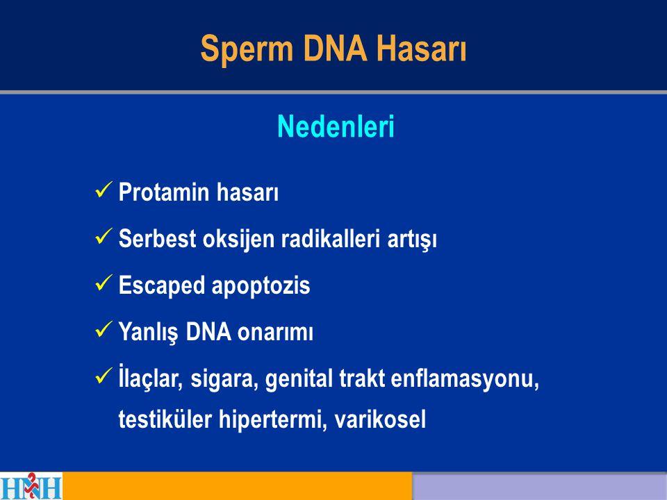 Sperm DNA Hasarı Nedenleri Protamin hasarı