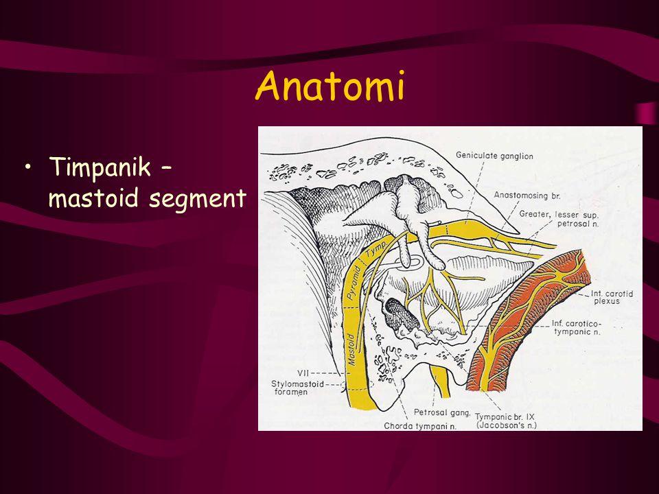 Anatomi Timpanik – mastoid segment