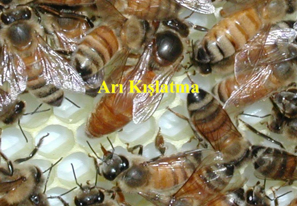 Arı Kışlatma