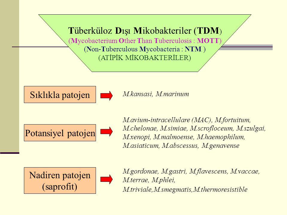 Tüberküloz Dışı Mikobakteriler (TDM)